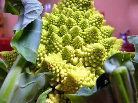 A head of romanesco cauliflower